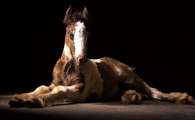 Horses Photography_Raphael Macek