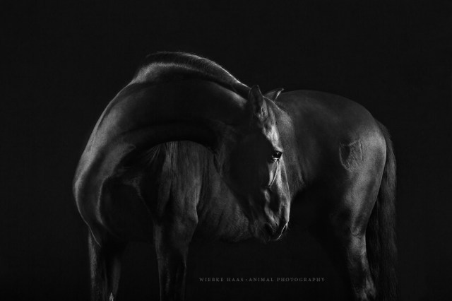 Horses Photography_Wiebke Haas22