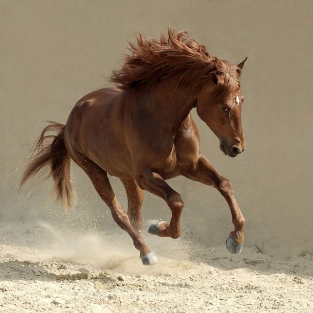 Horses Photography_Wojtek_Kwiatkowski_10