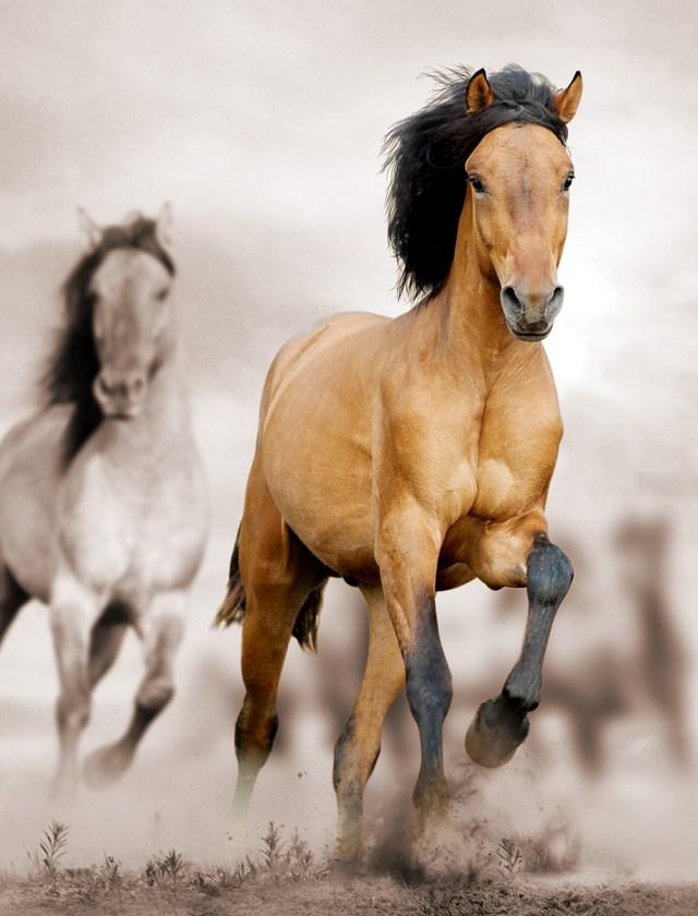 Horses Photography_wild_horse