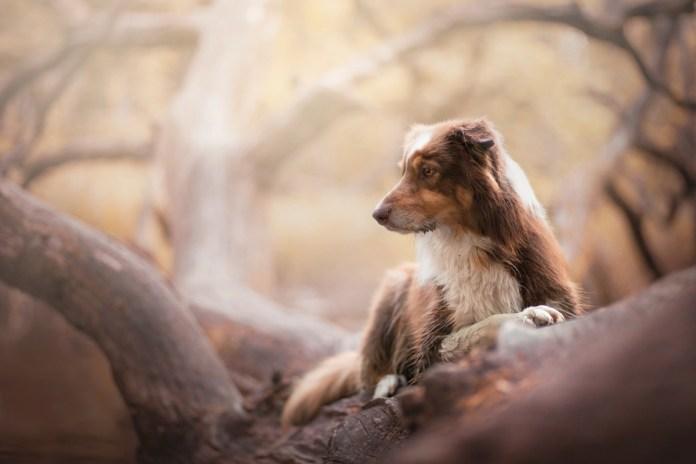 Dog Portraits Photography by Alicja Zmysłowska (10)