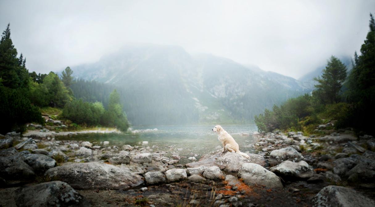 Dog Portraits Photography by Alicja Zmysłowska (4)