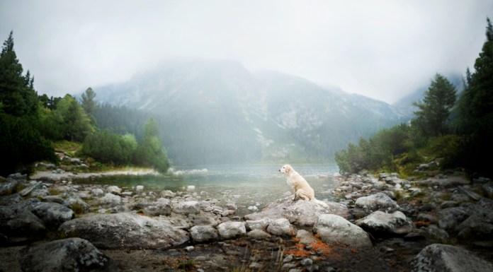 Dog Portraits Photography by Alicja Zmysłowska (11)