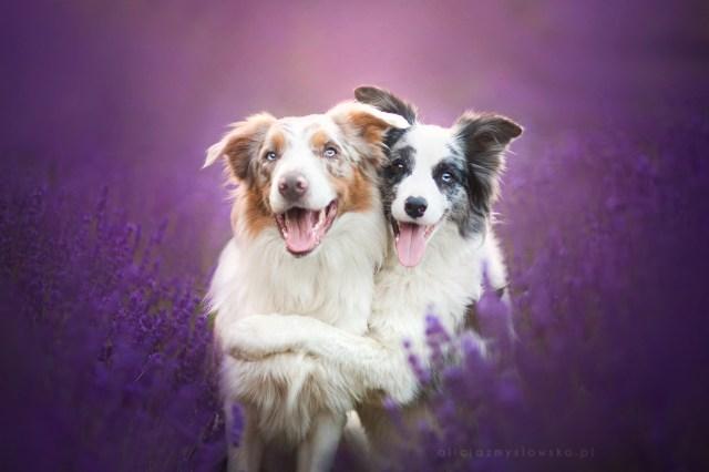 Dog Portraits Photography by Alicja Zmysłowska (18)