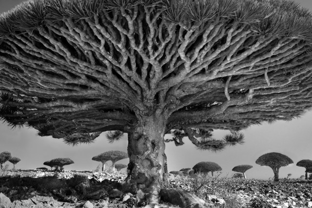Famous_Photographs_of_Trees_by_Beth_Moon (10)