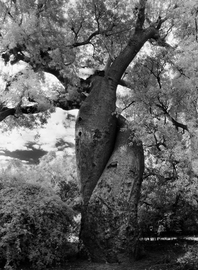 Famous_Photographs_of_Trees_by_Beth_Moon (16)