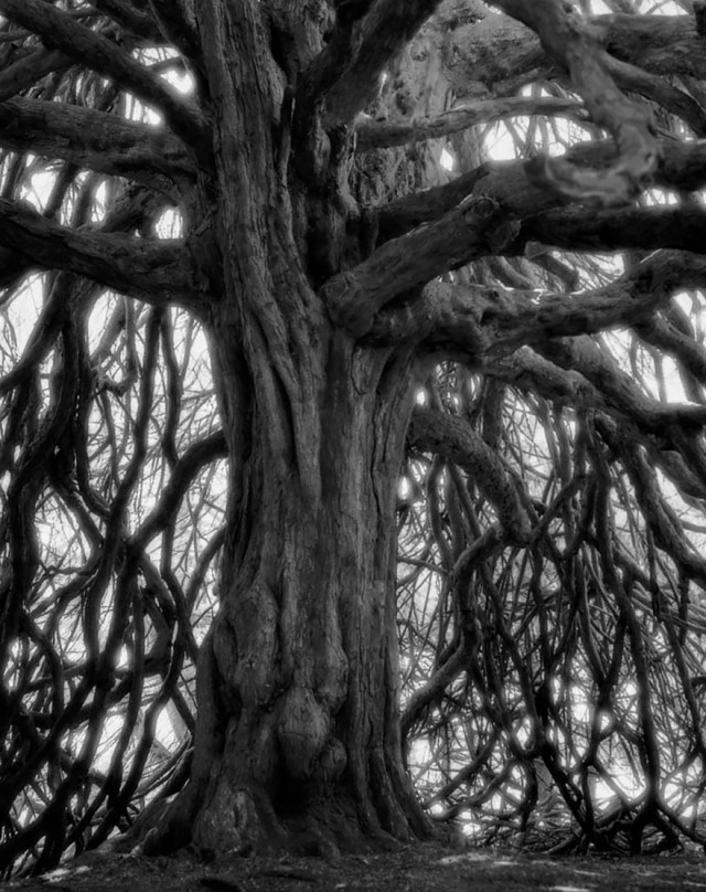 Famous_Photographs_of_Trees_by_Beth_Moon (21)