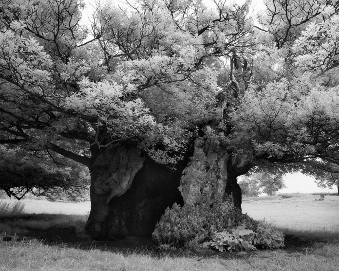 Famous_Photographs_of_Trees_by_Beth_Moon (24)