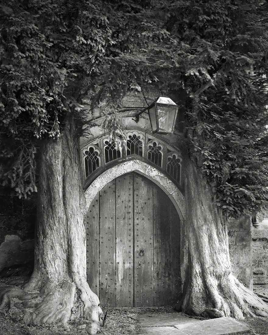 Famous_Photographs_of_Trees_by_Beth_Moon (7)