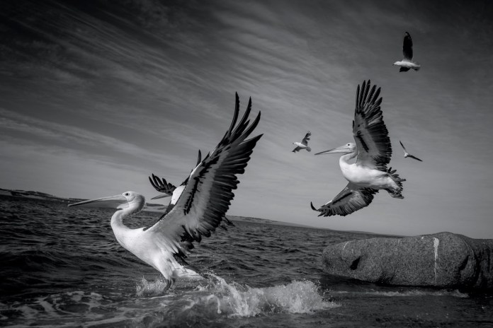 """Untitled-1""""Taking Flight"""" by p-jtaylor"""