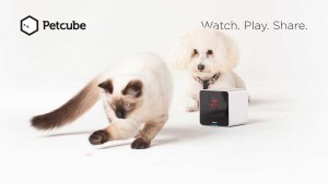 pet monitoring systempet store-petcube