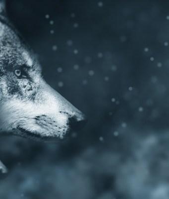 wolf how to make wolf photo manipulations