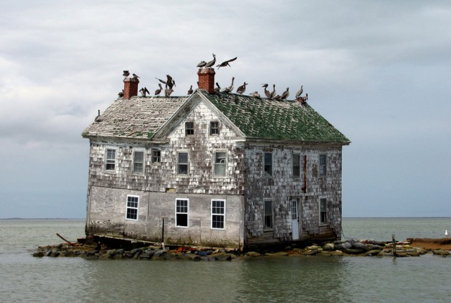 Maryland, USA. This abandoned house is a favorite location of birds and is the last reminder that people lived