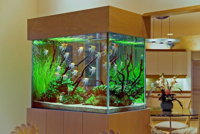 Choosing the Fish for your Aquarium