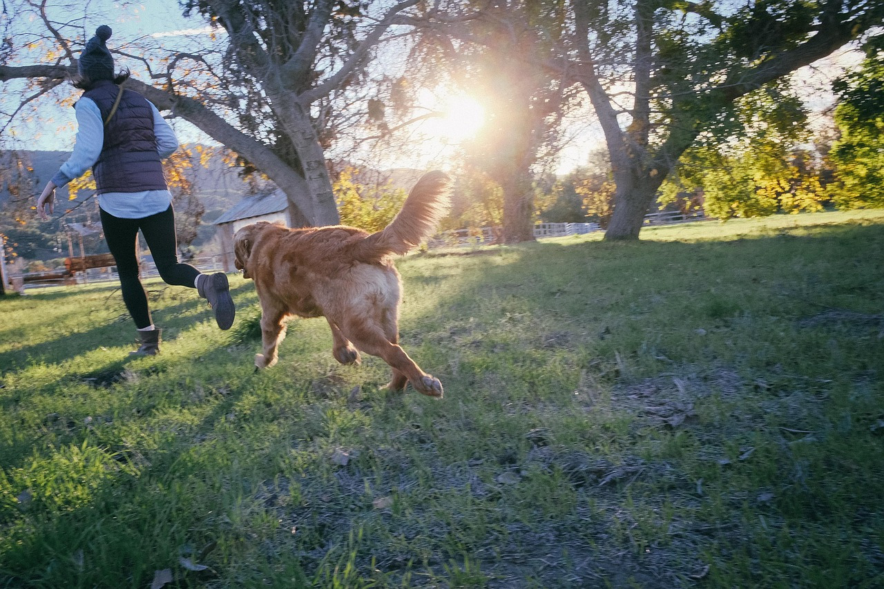Seven Ways To Get Ready For A New Dog.