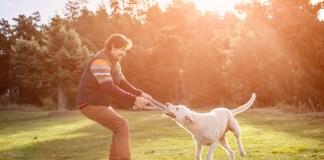 How to Discipline Your Doggie