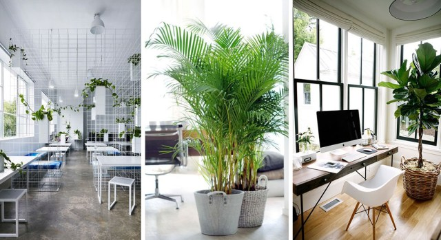 Plants-in-the-office-