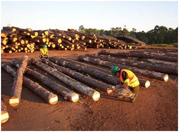 Acoustic Testing USA Log Supplies For Internal Wood Quality