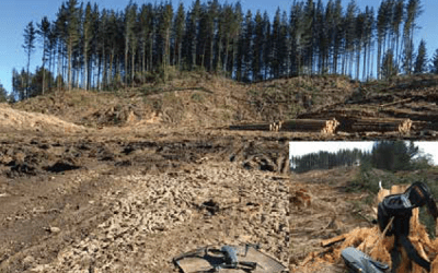 UAV / Drones in Forestry – Reaching for a New Perspection