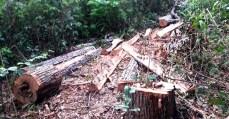 invasão de madeireiros e loteamento na Terra Indígena Arariboia