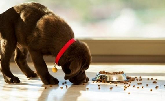 alimentacion seca perro