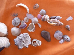 Some of the shells we found at the beach.