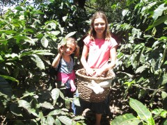 Zoe learned  she would get $3 for every basket full of beans she picked.  Also, sometimes there are snakes in the bushes.