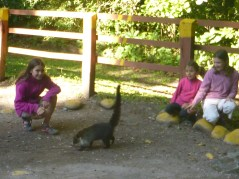 The girls didn't ignore the coati.