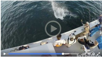 Video: PEI Giant Tuna Fishing with Dreamin On Productions