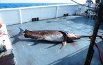 Longline Boats Allowed To Fish Florida's East Coast