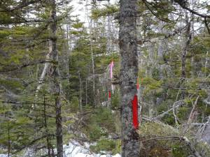 An Example of a Well Marked, Blazed Property Line.
