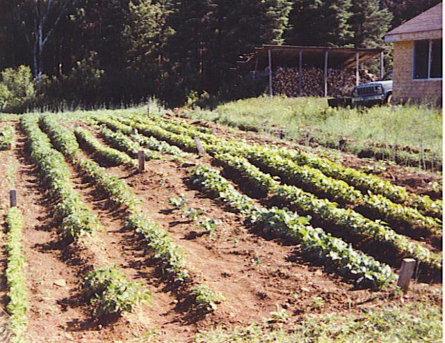 Garden in Maine