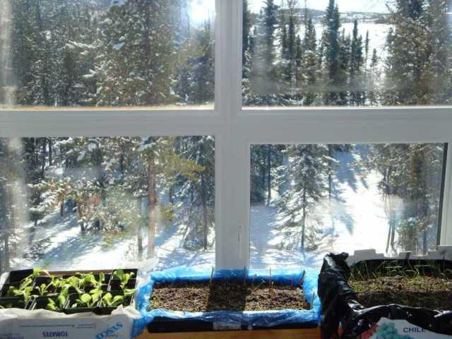 Flats on Our Windowsill