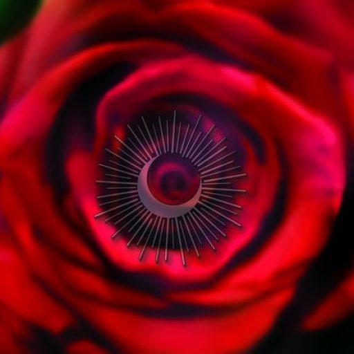 Szerelem rózsa