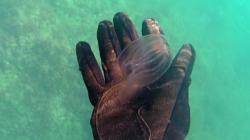medusa_plancton-2016-11-05-18h23m02s39