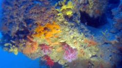 corallo_rosso-2016-12-28-16h58m08s197