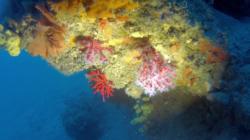 corallo_rosso-2016-12-28-16h58m26s130