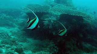 Nosy Be - Madagascar - Coral Reef I