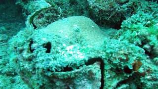 Nosy Be - Madagascar - Tridacna Gigas II