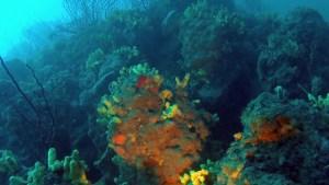 Sponges - Porifera