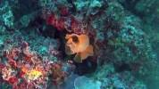 Trina di Mare - Reteporella grimaldii