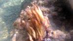 Mucillagine - Oscillatoriales Algae