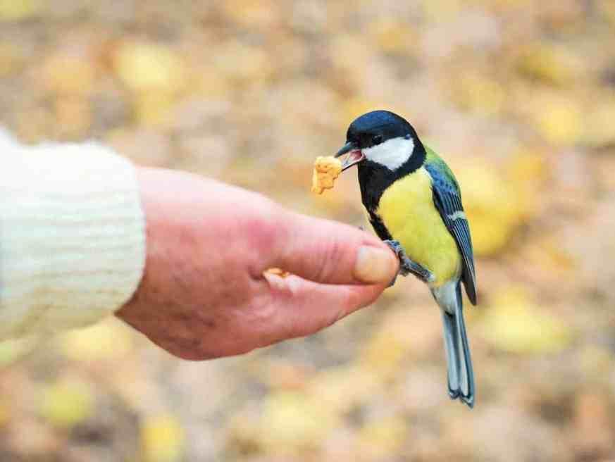 Why Do Birds Suddenly Appear?