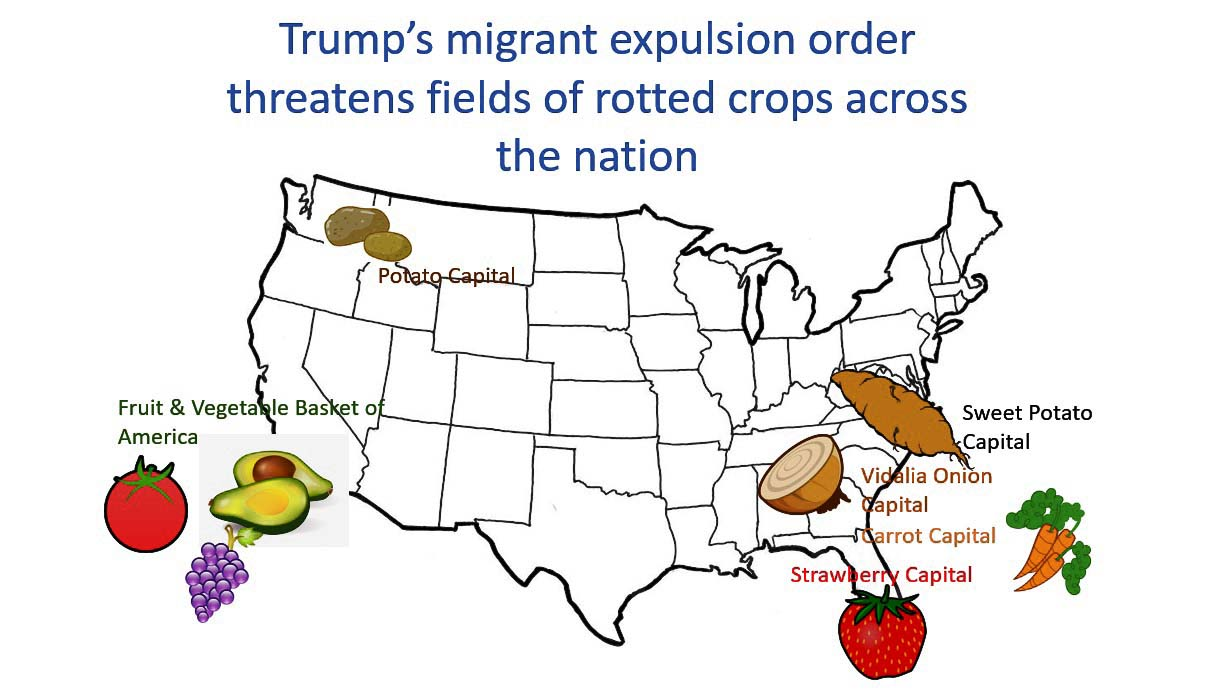 Image result for crops picked by illegal immigrants