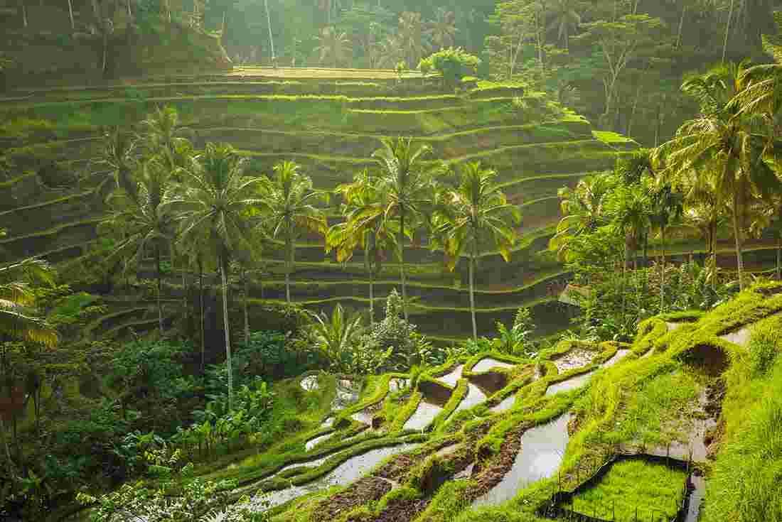 Tempat Wisata Paling Worth It Untuk Dikunjungi Saat Liburan Di Bali