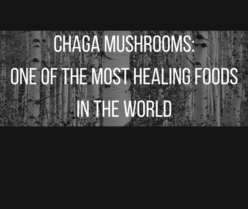 Chaga mushrooms: one of the most healing foods on earth