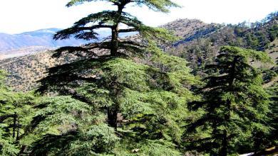 Photo de Le parc de Belezma dans un réseau mondial de protection de l'environnement