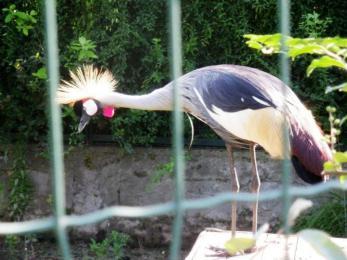 Crocetta & i suoi collaboratori insistono: via gli uccelli da Villa d'Orleans