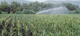 L'ultima 'magia': fare pagare agli agricoltori siciliani le clientele dei Consorzi di bonifica