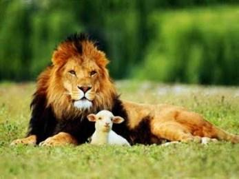 Pensierino della sera/ Dedicato a pecore e leoni